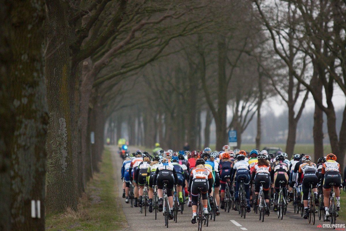 The peloton navigates through a forested area on the circuit.