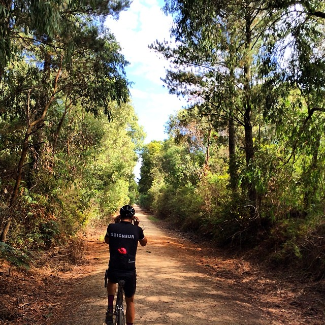 The Great Southern Rail Trail, South Gippsland. #soigneutautumn #wymtm - via CyclingTips Instagram feed
