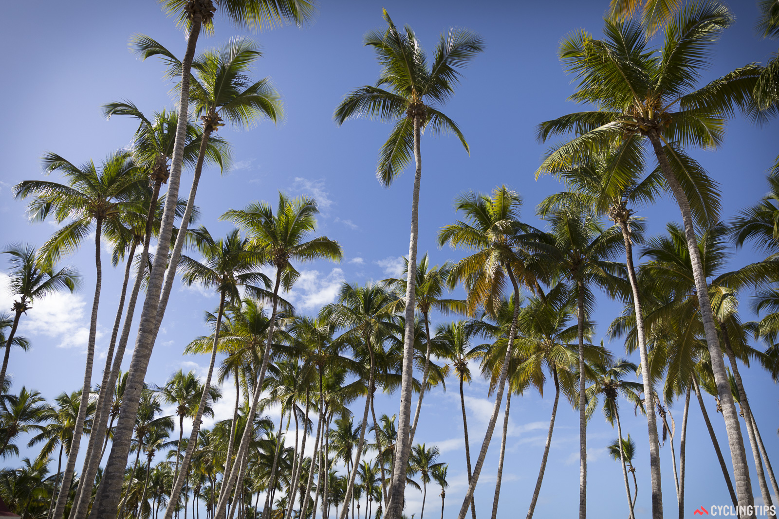 The palm trees and sandy beaches of the Dominican Republic are well known to tourists but, several kilometres away from this location, a very different world exists.