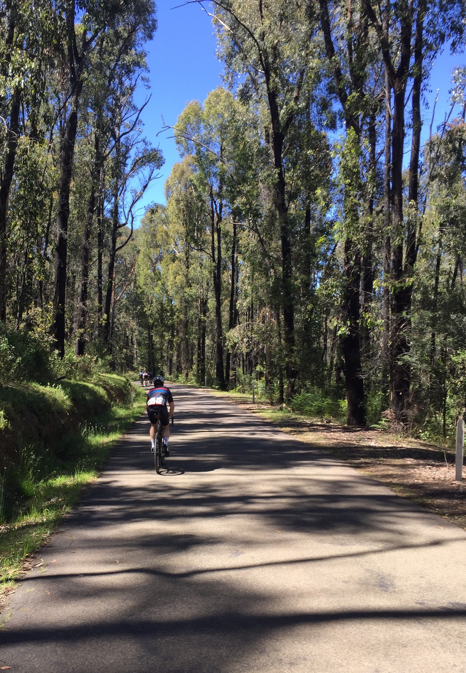 """Richard Bowen, Australia. """"Acheron Way at the 2016 Giro Della Donna. We meandered through here, enjoying the riding in such a beautiful place. I think this photo captures the experience, especially with the vibrant blue sky dominant through the green of the trees. I've had this photo as my iPhone lockscreen image ever since!"""" Smartphone / Action Cam. @ancible"""