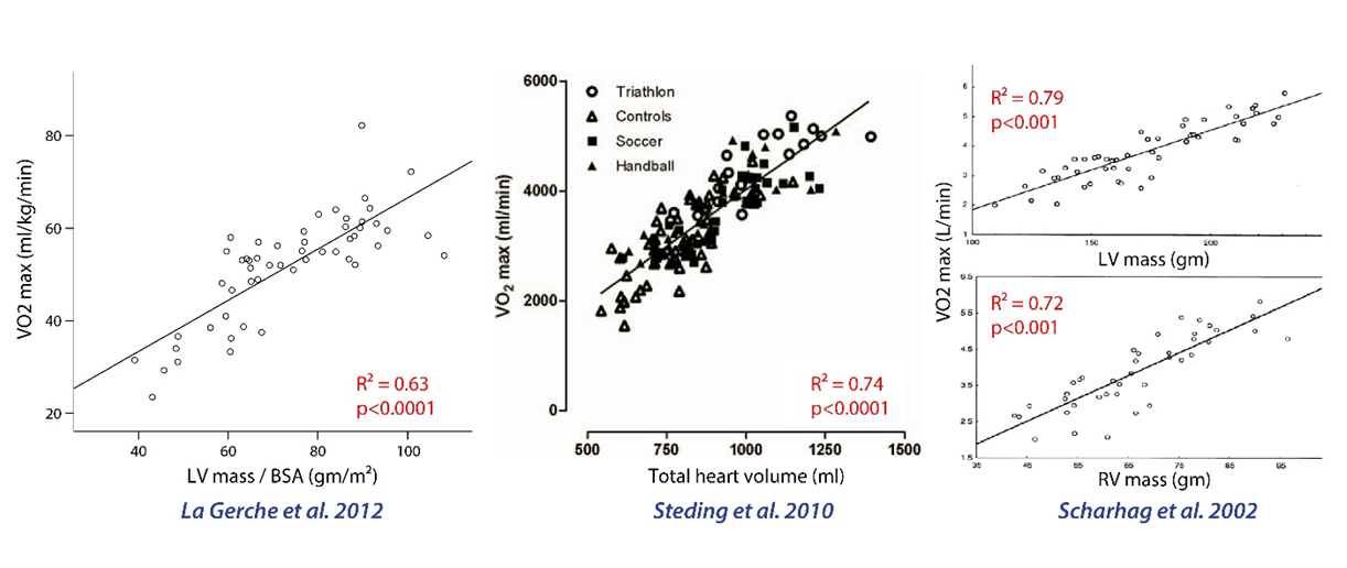 Three studies demonstrating a very strong association between heart size and VO2 max.